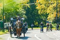 Carriage horses return to Central Park!2020 - Triangle NY