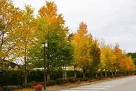 10月初旬の軽井沢の紅葉♪ - きれいの瞬間~写真で伝えるstory~