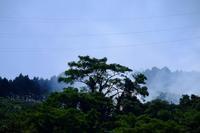 裏山の大樹 - きずなの家創り