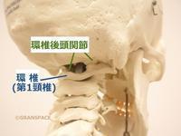 『全身の関節』環椎後頭関節 その8呼吸との関係 - 整体院GRAN SPACE からだブログ