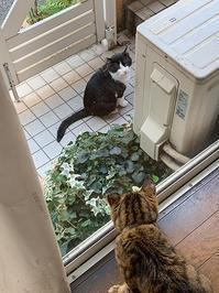 じーーーーっと見る。 - ぶつぶつ独り言2(うちの猫ら2021)
