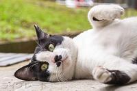 ご近所猫 2020.10.04 - Rayblade Photos