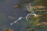 身近な公園の秋 - 蝶と蜻蛉の撮影日記
