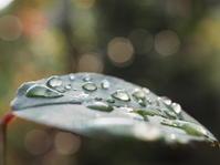 水滴 - グリママの花日記
