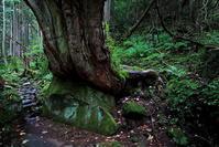 茅野市蓼科・苔と原生林の世界その1 - 日本あちこち撮り歩記