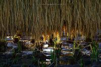 野沢温泉村はざかけ村の田んぼにて - 野沢温泉とその周辺いろいろ2