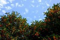 秋の空・アラカルト - シンプル・ハウスワイフのRANDOM SHOT