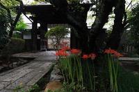 雨宝院の彼岸花 - 花景色-K.W.C. PhotoBlog