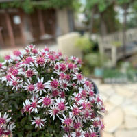 #おうち時間に癒しを - ブレスガーデン Breath Garden 大阪・泉南のお花屋さんです。バルーンもはじめました。
