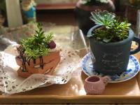 小鳥隊長♡とシスターエリザベスの秋バラ☆と、薬剤散布♫ - 薪割りマコのバラの庭