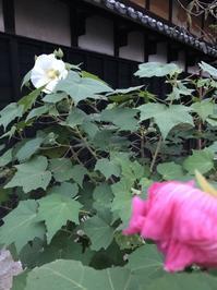 白い花と赤い蕾 - 今日もひとつだけ