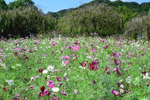 花・植物の見頃を極めるのは難しい -