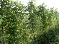 自然農の畑 9月中旬~10月上旬 - 北国の田舎暮らし