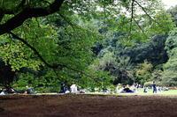 新宿御苑を散歩 - お散歩写真     O-edo line