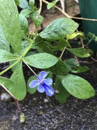 花の名残り - 花の窓