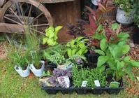 届いた苗をひたすら植えまくる♪ - ペコリの庭と時々パン