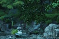 小雨降る日の桜花亭の庭園の清々しいみどり?(2) - 一場の写真 / 足立区リフォーム館・頑張る会社ブログ