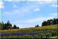 秋の色(滝野すずらん丘陵公園) - 北海道photo一撮り旅