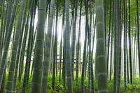 鎌倉英勝寺続き - ようこそ風の散歩へ
