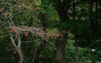秋模様 - へっぽこな・・