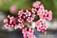 ◆ 「多肉植物」が開花した日(2020年10月) - 空とグルメと温泉と