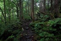 茅野市蓼科・苔と原生林の世界その3 - 日本あちこち撮り歩記
