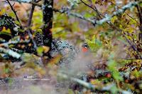 高原のノゴマ - azure 自然散策 ~自然・季節・野鳥~