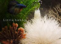 バイオーブのオブジェ~ウミユリと風水石ホワイト - Little hobby