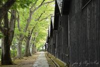 欅並木 - Ryu Aida's Photo