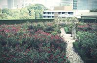 Red Rose Garden - IL EST TROP TARD 時は過ぎゆく ... 2