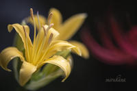 黄色信号。 - MIRU'S PHOTO