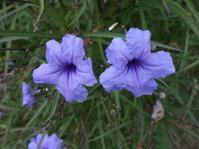 お散歩5★紫の花 - 月夜飛行船2