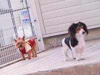 DOG PHOTO#155:7回目のLUNAの日。 - Precious*恋するカメラ