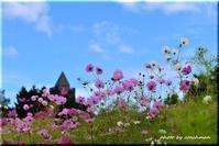 コスモスは秋の色(滝野すずらん丘陵公園) - 北海道photo一撮り旅