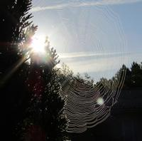朝陽と蜘蛛の巣 - @lapie.fr