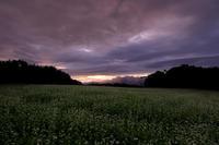 笠の朝 - 花景色-K.W.C. PhotoBlog