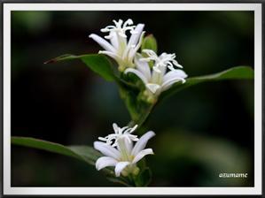 那須野が原公園の白と昆虫 -