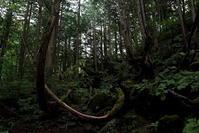 茅野市蓼科・苔と原生林の世界ラスト - 日本あちこち撮り歩記