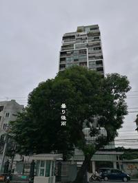 曇り後雨 - Tangled with 2・・・・・