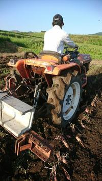 台風前の収穫 - 山脇農園ブログ
