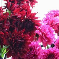 旬の花「華麗なダリアのブーケ」名古屋レッスン - 新しい地図 ~ やまよう編(アンフィモンフルール)