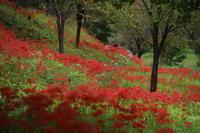 秋の色 - MPG