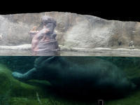 水の中のカバ - 動物園放浪記