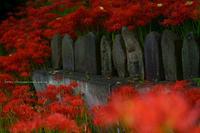 中野市彼岸花の咲く田んぼにて - 野沢温泉とその周辺いろいろ2