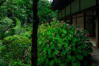 三千院の秋海棠 - 花景色-K.W.C. PhotoBlog