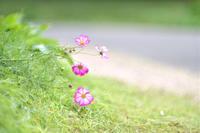あなたを - お花びより