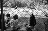 土曜日の低学年少年野球 - 照片画廊