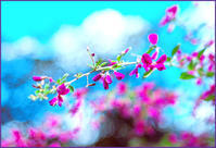 ハイキーな世界への誘い^^ - ☆彡 四季写遊 ☆彡