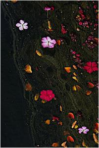 池の淀み - HIGEMASA's Moody Photo