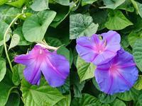 花を食べるバッタ - NATURALLY